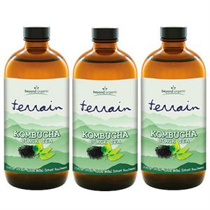Picture of Terrain Kombucha Black Tea (3 Pack)